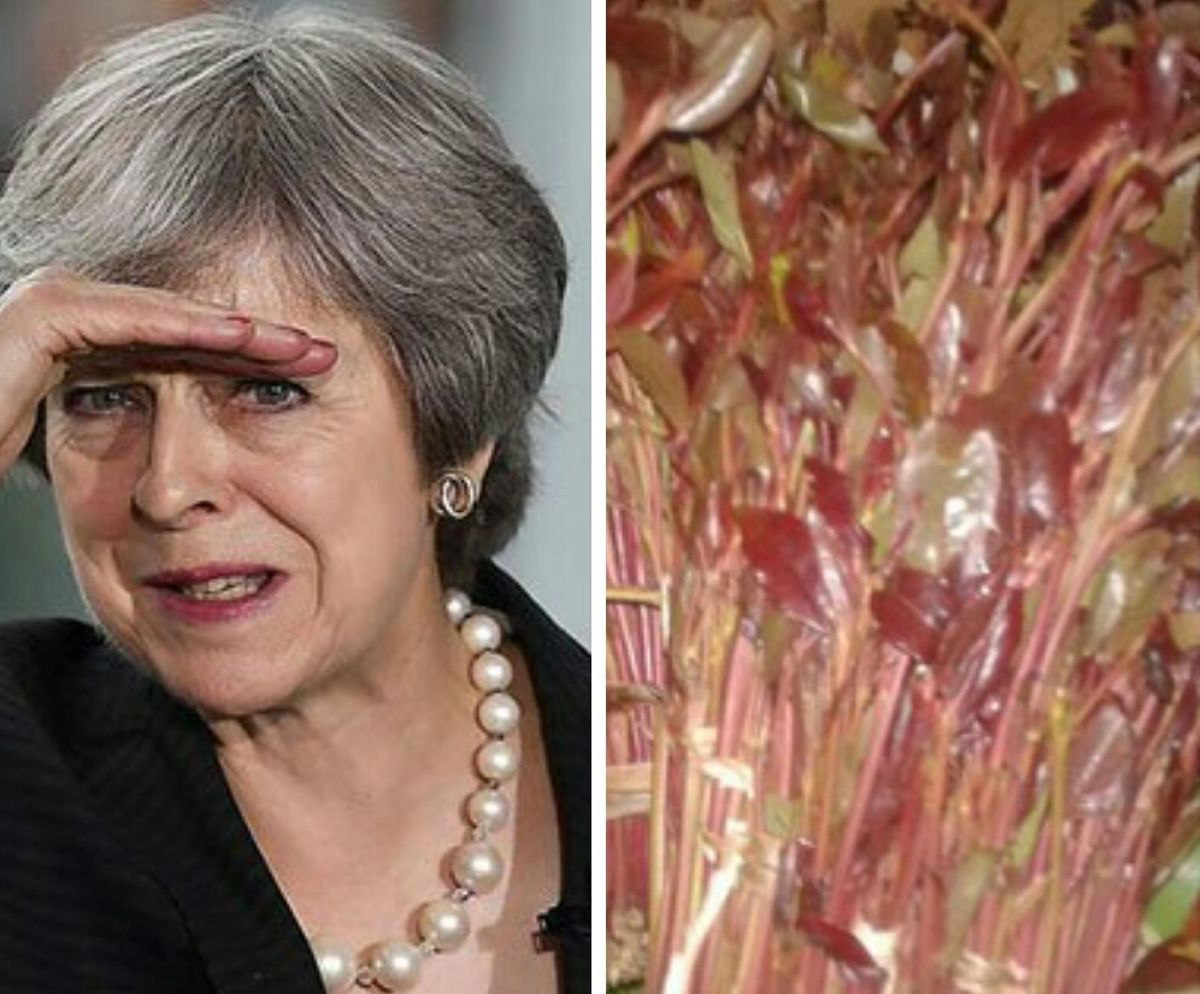 Who is Theresa May, the UK leader who banned miraa in Britain?