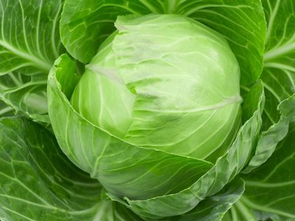 Effects of eating cabbage