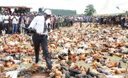 Ruto sells chicken worth Sh6 million